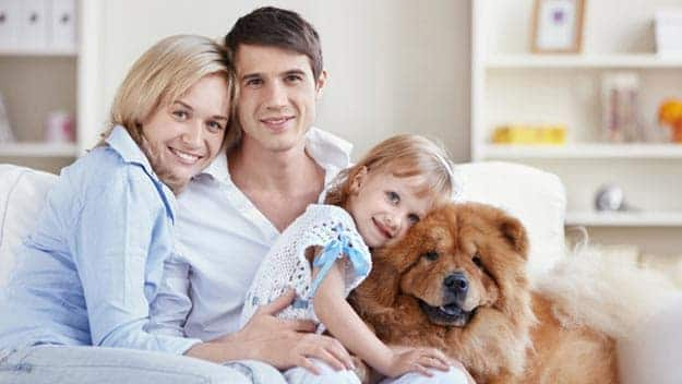 Wills & Trusts dog-young-family Direct Wills Telford